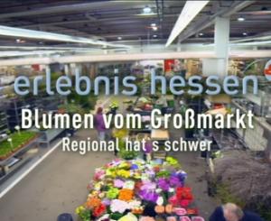 Im Blumengroßmarkt mit dem HR